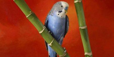 Что делать, если ребенок просит купить ему попугая?