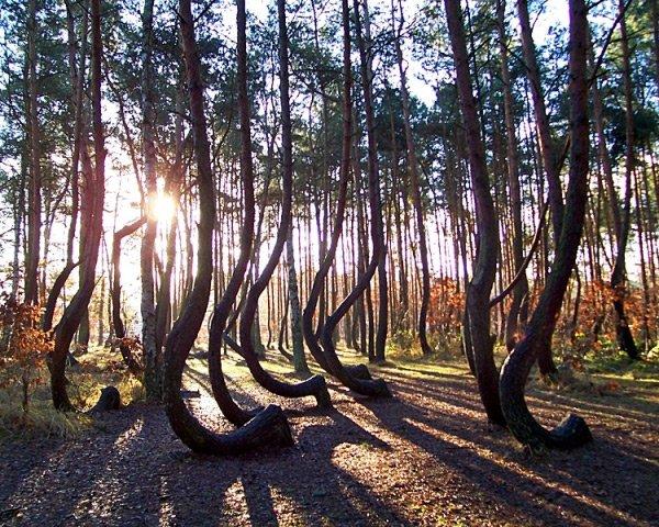 Удивительный лес в Польше