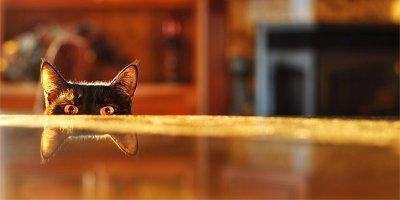 Как отучить кошку лазить по столам