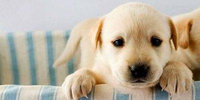 Имена для маленьких собак