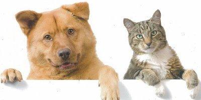 Нужноли кастрировать или стерилизовать кота икошку?