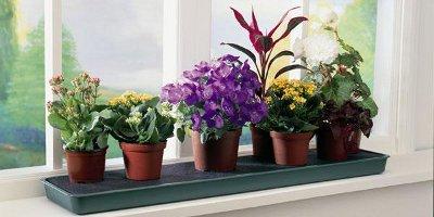 Какие растения для дома полезнее всего?