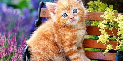 Чем кормить котенка и как это делать правильно